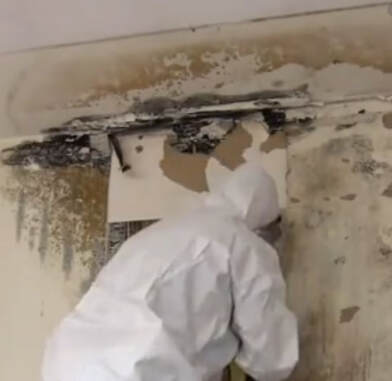 mold remediation victoria bc
